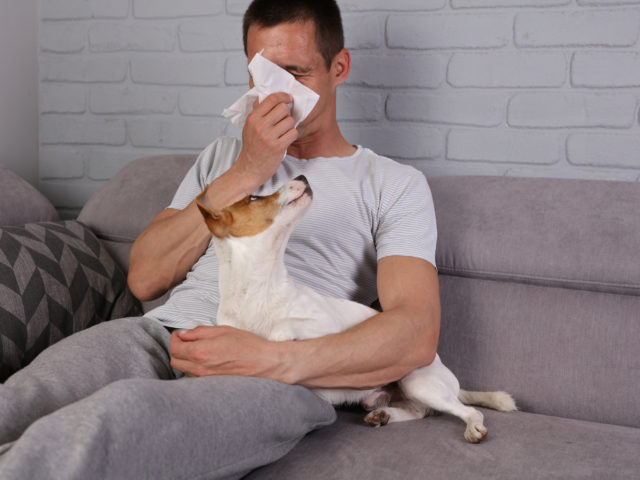 Pet Allergies - Allergy, Asthma & Immunology Associates of Tampa Bay