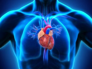 Guide To Cardiovascular Disease - Lynx Healthcare
