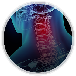 Spine & Neck Surgery
