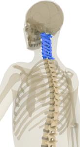 Spine Surgery - Orthopedic - Spine - Neck surgery - Spectrum Orthopaedics - Dr. Stefanko - Herniated Disc - Myelopathy - Degenerative Disease - Radiculopathy - Spinal Stenosis