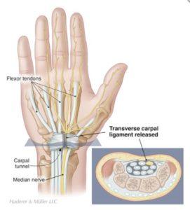 Hand and wrist anatomy