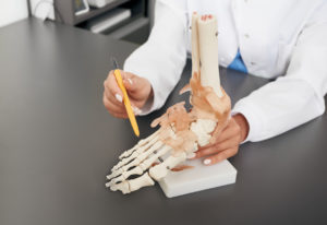 Doctor orthopedist shows to the anatomical model of the foot. Arthritis, foot injuries, flat feet and pain