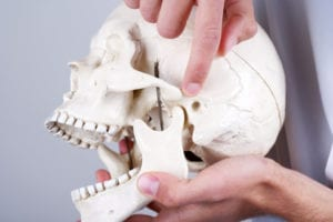 doctor showing temporomandibular joint