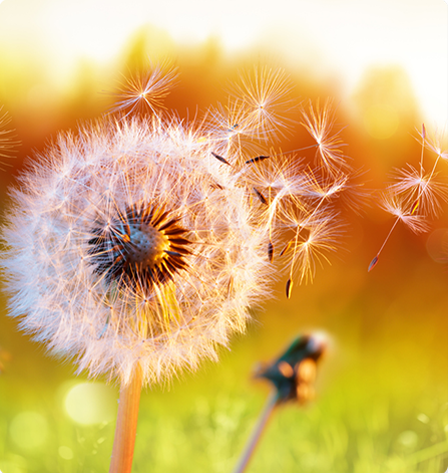 Pollen allergy - Allergy Seasons - ENT Specialist Georgetown, Texas - Allergy test near me