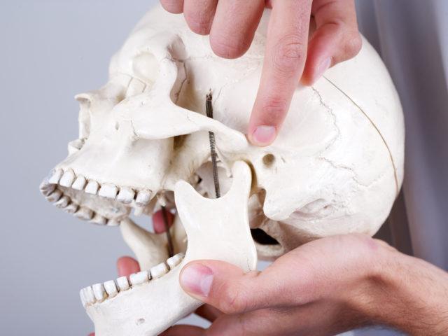 Doctor showing temporomandibular joint